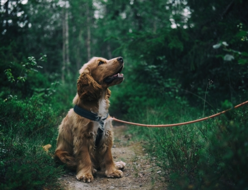 5 tips til at forkæle din hund
